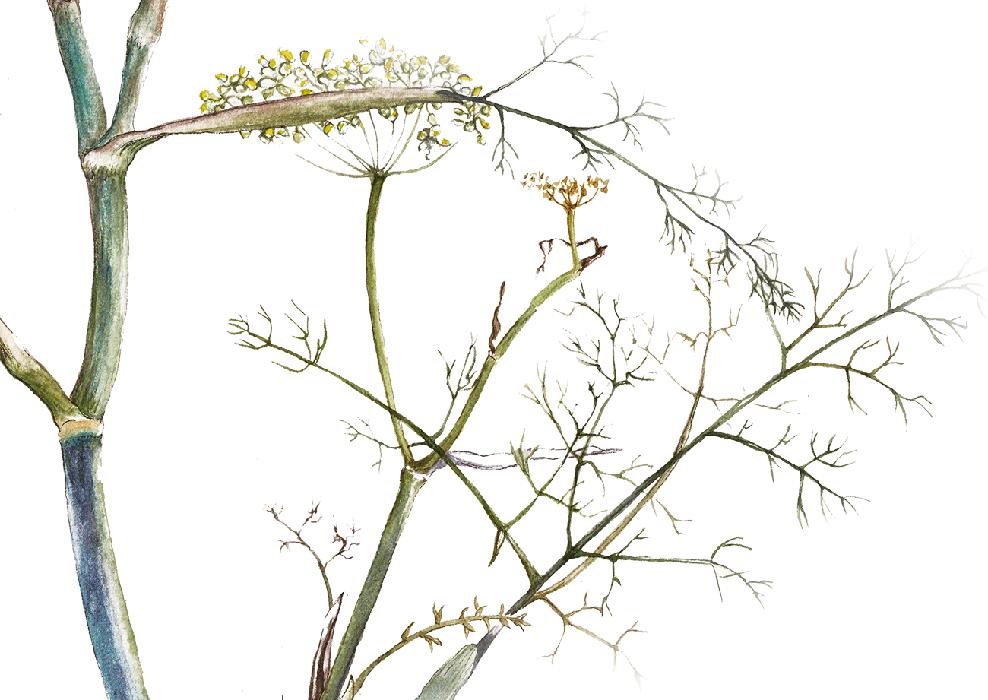 elisabeth vitou artiste botanique