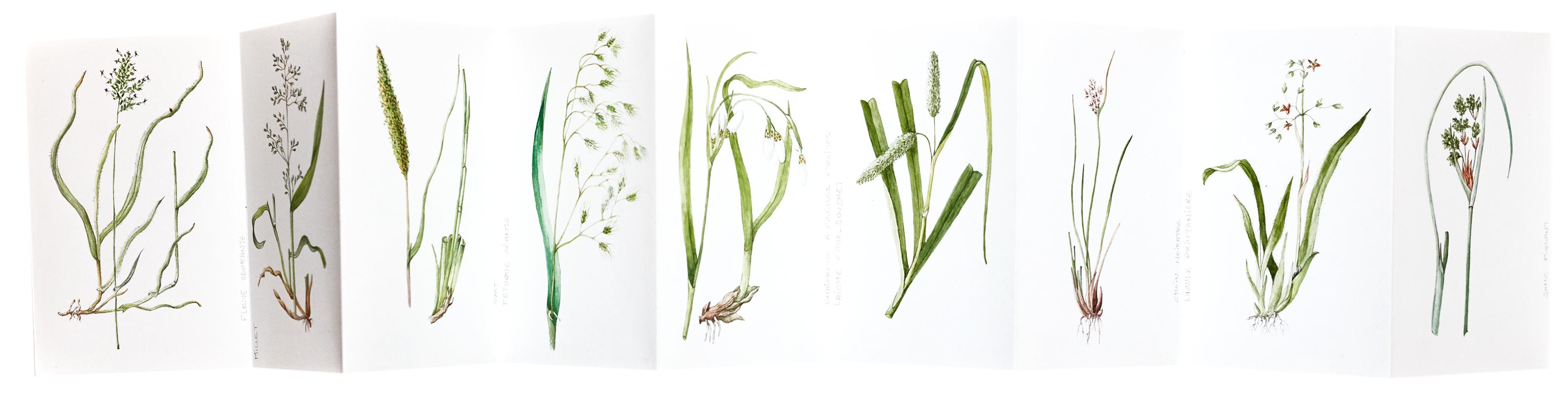 élisabeth Vitou artiste botanique