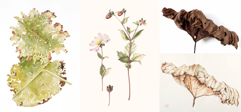 elisabeth vitou-artiste botanique-aquarelle botanique paris-aquarelle botanique-feuilles-peinture botanique-cours de dessin botanique