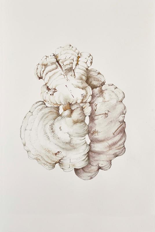 elisabeth vitou artiste botanique-aquarelle botanique paris-aquarelle botanique-champignon-peinture botanique-cours de dessin botanique-technique aquarelle botanique