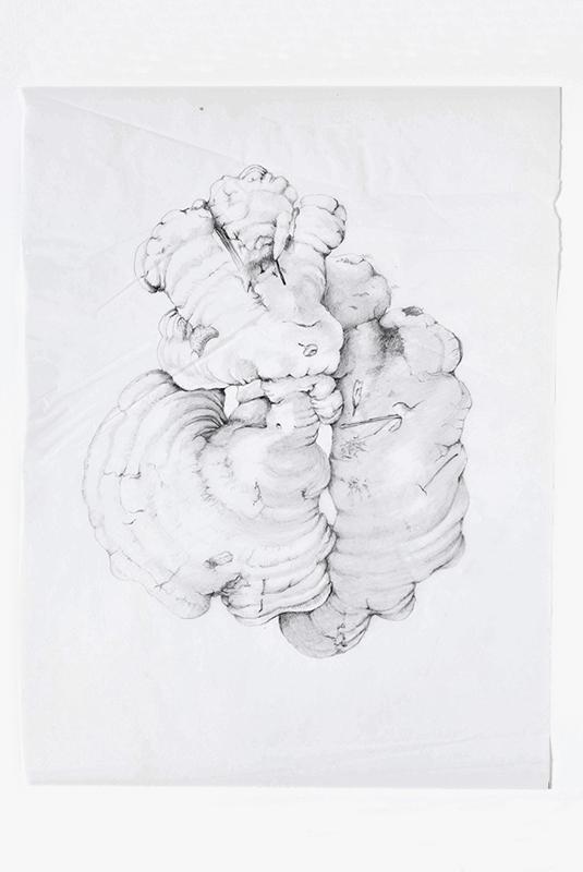 elisabeth vitou artiste botanique-aquarelle botanique paris-aquarelle botanique-champignon-peinture botanique-cours de dessin botanique-calque dessin botanique