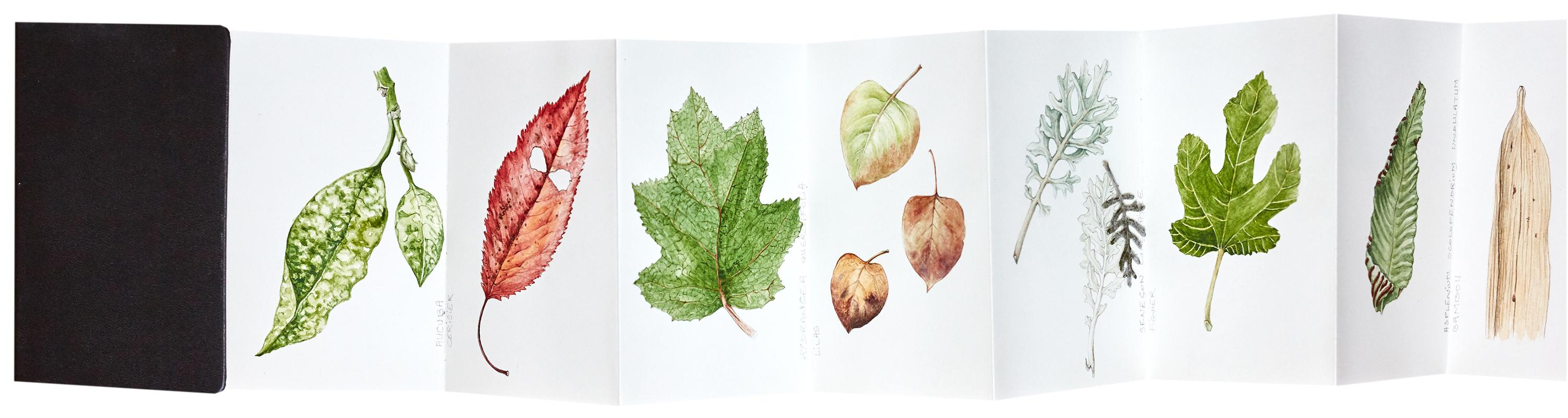 elisabeth vitou-artiste botanique-cours d'illustration botanique-stage dessin botanique-apprendre le dessin botanique