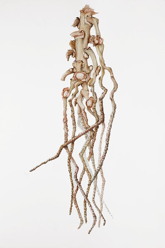 elisabeth vitou artiste botanique-dattier-stage aquarelle botanique paris
