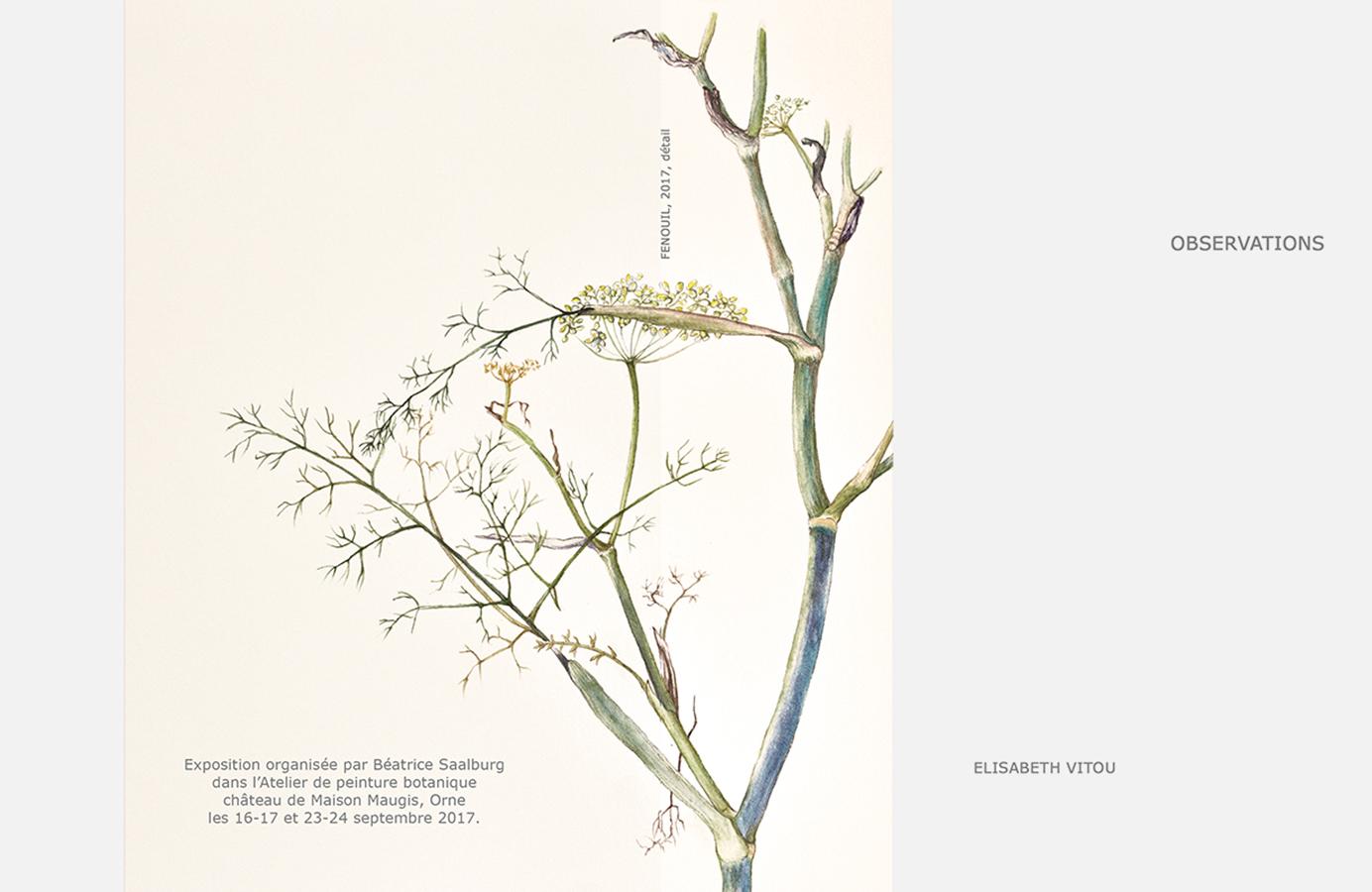elisabeth vitou-artiste botanique-tige botanique-peinture botanique-illustration botanique paris