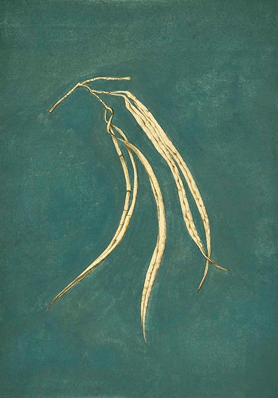 elisabeth vitou-artiste botanique paris-inde radjasthan-aquarelle botanique
