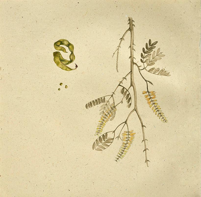 elisabeth vitou-artiste botanique-paris-inde-radjasthan