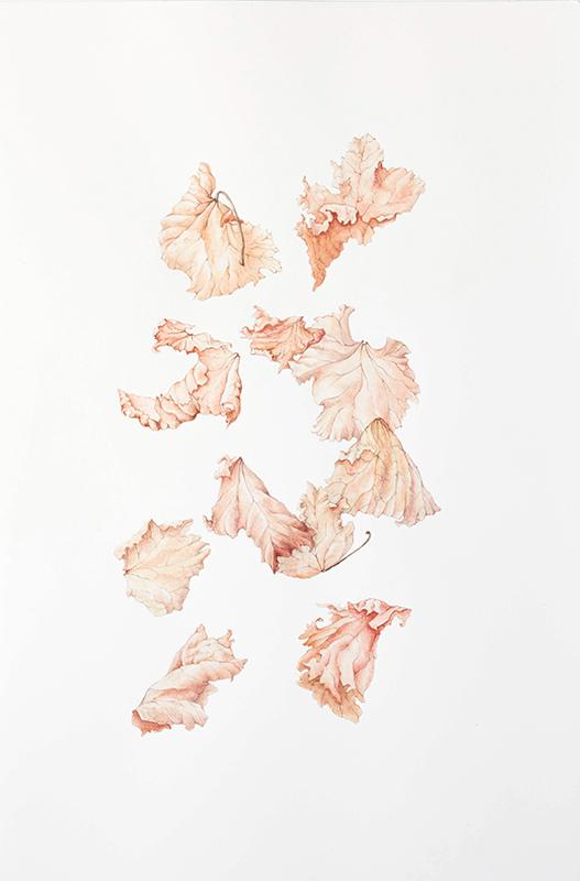 elisabeth vitou-artiste botanique-vigne-aquarelle botanique