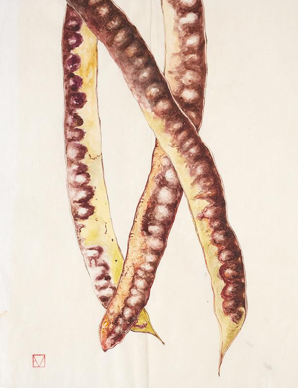 elisabeth vitou-artiste botanique